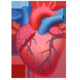 Emoji Anatomi Jantung Apple