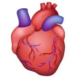 Emoji Anatomi Jantung WhatsApp
